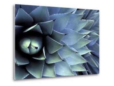 Pattern in Agave Cactus-Adam Jones-Metal Print