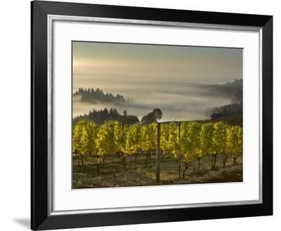 Fog Pools in Willamette Valley, Dundee, Oregon, USA-Janis Miglavs-Framed Photographic Print