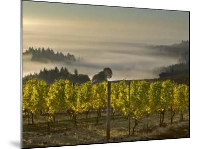 Fog Pools in Willamette Valley, Dundee, Oregon, USA-Janis Miglavs-Mounted Photographic Print