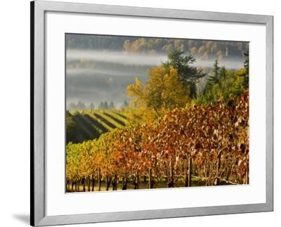 Fog Pools in a Finger of the Willamette Valley, Oregon, USA-Janis Miglavs-Framed Photographic Print