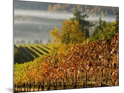 Fog Pools in a Finger of the Willamette Valley, Oregon, USA-Janis Miglavs-Mounted Photographic Print