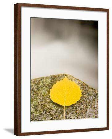 An aspen leaf next to a stream in a Forest in Grafton, New Hampshire, USA-Jerry & Marcy Monkman-Framed Photographic Print