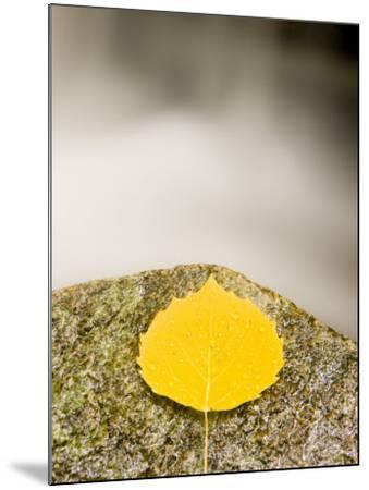 An aspen leaf next to a stream in a Forest in Grafton, New Hampshire, USA-Jerry & Marcy Monkman-Mounted Photographic Print