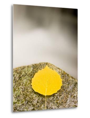 An aspen leaf next to a stream in a Forest in Grafton, New Hampshire, USA-Jerry & Marcy Monkman-Metal Print