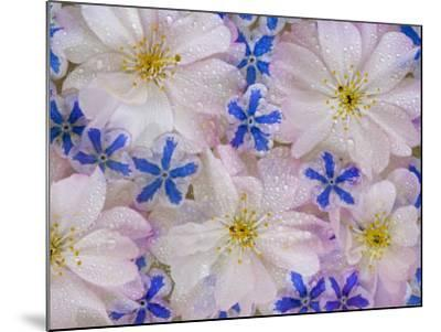 Montage of Cherry Blossoms and Blue Flowers-Don Paulson-Mounted Photographic Print