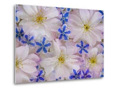 Montage of Cherry Blossoms and Blue Flowers-Don Paulson-Metal Print