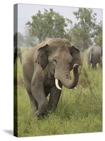 Elephant Greeting, Corbett National Park, Uttaranchal, India-Jagdeep Rajput-Stretched Canvas Print