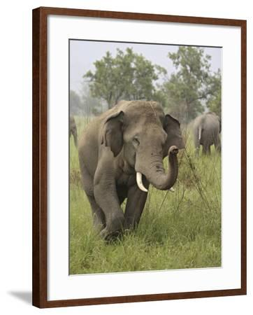 Elephant Greeting, Corbett National Park, Uttaranchal, India-Jagdeep Rajput-Framed Photographic Print