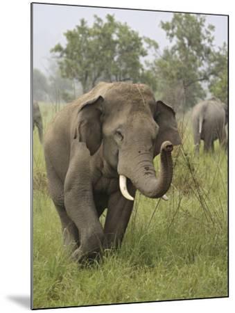 Elephant Greeting, Corbett National Park, Uttaranchal, India-Jagdeep Rajput-Mounted Photographic Print