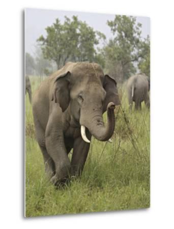 Elephant Greeting, Corbett National Park, Uttaranchal, India-Jagdeep Rajput-Metal Print