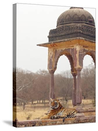 Royal Bengal Tiger At The Cenotaph, Ranthambhor National Park, India-Jagdeep Rajput-Stretched Canvas Print