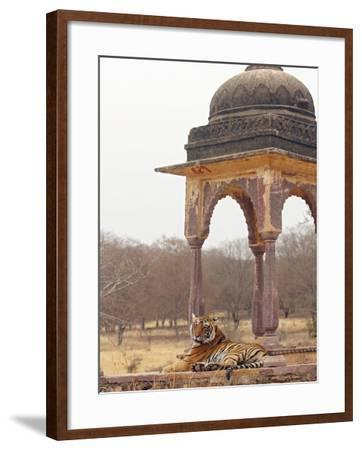 Royal Bengal Tiger At The Cenotaph, Ranthambhor National Park, India-Jagdeep Rajput-Framed Photographic Print
