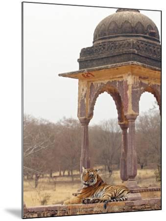 Royal Bengal Tiger At The Cenotaph, Ranthambhor National Park, India-Jagdeep Rajput-Mounted Photographic Print