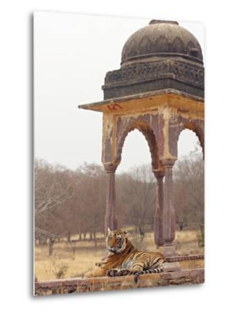 Royal Bengal Tiger At The Cenotaph, Ranthambhor National Park, India-Jagdeep Rajput-Metal Print