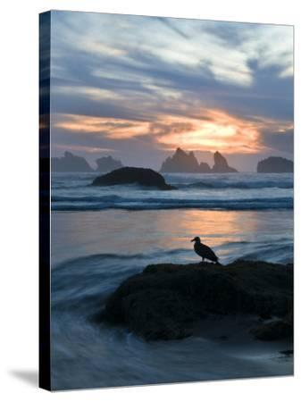 Seagull Silhouette on Coastline, Bandon Beach, Oregon, USA-Nancy Rotenberg-Stretched Canvas Print