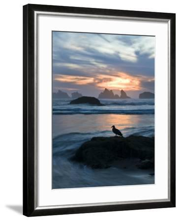 Seagull Silhouette on Coastline, Bandon Beach, Oregon, USA-Nancy Rotenberg-Framed Photographic Print
