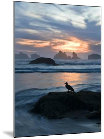 Seagull Silhouette on Coastline, Bandon Beach, Oregon, USA-Nancy Rotenberg-Mounted Photographic Print
