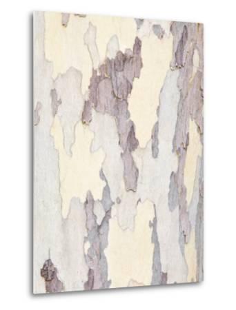 Sycamore Trunk Detail, Sedona, Arizona, USA-Rob Tilley-Metal Print