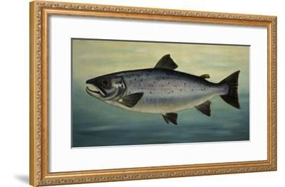 Atlantic Salmon-Porter Design-Framed Premium Giclee Print