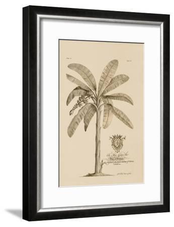 Banana Tree-Porter Design-Framed Premium Giclee Print
