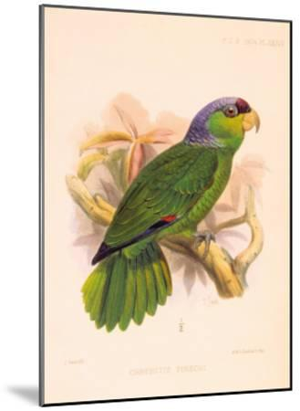 Joseph Smit Parrots Parrot Plate 34-Porter Design-Mounted Premium Giclee Print