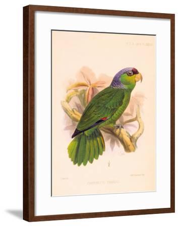 Joseph Smit Parrots Parrot Plate 34-Porter Design-Framed Premium Giclee Print