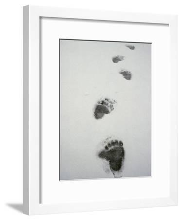 Grizzly Bear Tracks in the Snow-Michael S^ Quinton-Framed Photographic Print