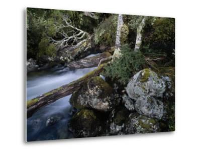 Mountain Stream Flows Through a Rain-Drenched Southern Beech Forest-Gordon Wiltsie-Metal Print