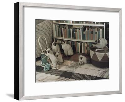 Adult Siamese Cats Watch as their Young Play with Yarn-Willard Culver-Framed Photographic Print