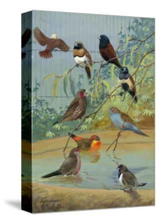Various Birds Rest in a Birdbath and on Branches That Hang Above-Allan Brooks-Stretched Canvas Print