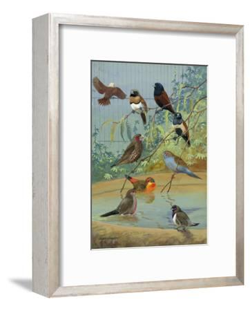 Various Birds Rest in a Birdbath and on Branches That Hang Above-Allan Brooks-Framed Photographic Print