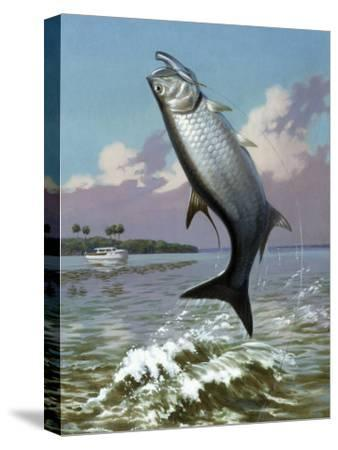 Tarpon Caught on Hook Leaps Out of Water, Fishing Boat Floats Nearby-Walter Weber-Stretched Canvas Print