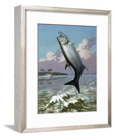 Tarpon Caught on Hook Leaps Out of Water, Fishing Boat Floats Nearby-Walter Weber-Framed Photographic Print