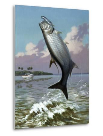 Tarpon Caught on Hook Leaps Out of Water, Fishing Boat Floats Nearby-Walter Weber-Metal Print