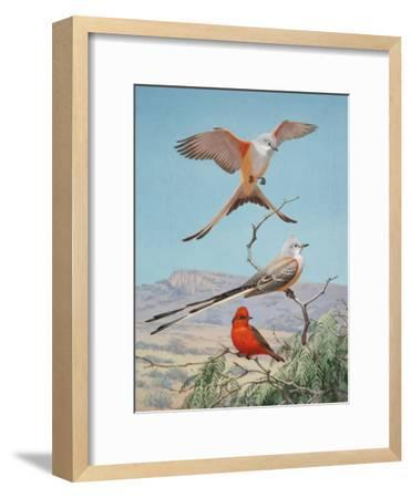 Scissor-Tailed and Vermilion Flycatchers Perch on a Mesquite Tree-Walter Weber-Framed Photographic Print