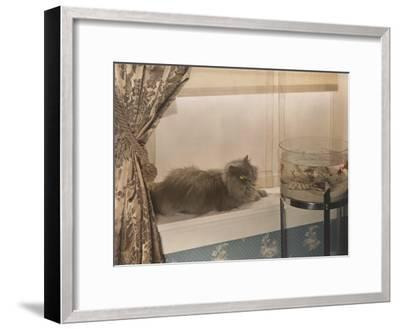 Blue Persian Cat Stares Intensely at Goldfish in a Bowl-Willard Culver-Framed Photographic Print