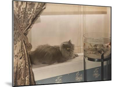 Blue Persian Cat Stares Intensely at Goldfish in a Bowl-Willard Culver-Mounted Photographic Print