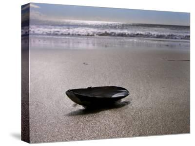 Mussel Shell Holding Water Near Surfs Edge on a Beach-White & Petteway-Stretched Canvas Print