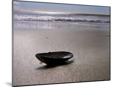 Mussel Shell Holding Water Near Surfs Edge on a Beach-White & Petteway-Mounted Photographic Print