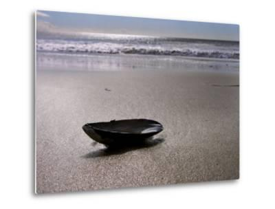 Mussel Shell Holding Water Near Surfs Edge on a Beach-White & Petteway-Metal Print