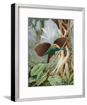 Perching Wallace's Standard-Wing Spreads its Wings-Walter Weber-Framed Photographic Print
