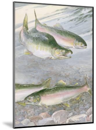 Painting of Pink Salmon at their Nest, with Typical Hump-Backed Male-Hashime Murayama-Mounted Photographic Print