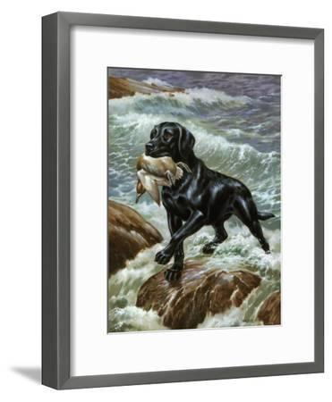Labrador Retriever Climbs from Surf with Dead Duck in its Jaws-Walter Weber-Framed Photographic Print