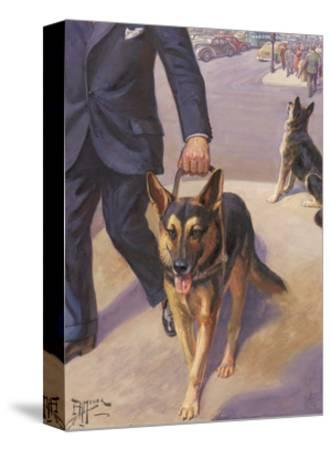 German Shepherd Works as a Seeing Eye Dog, Leading a Blind Man--Stretched Canvas Print