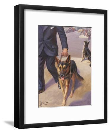 German Shepherd Works as a Seeing Eye Dog, Leading a Blind Man--Framed Photographic Print