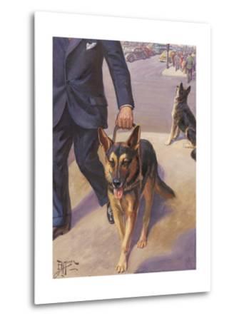 German Shepherd Works as a Seeing Eye Dog, Leading a Blind Man--Metal Print