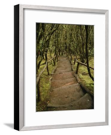 Dirt Hiking Path Through the Garajonay National Park on La Gomera-xPacifica-Framed Photographic Print