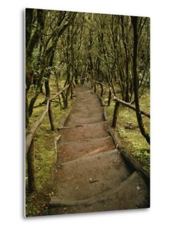 Dirt Hiking Path Through the Garajonay National Park on La Gomera-xPacifica-Metal Print