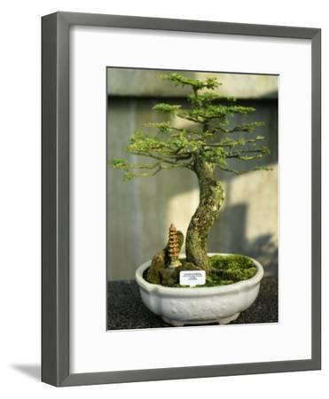 Bonsai Tree Inside of the Botanical Garden in Singapore-xPacifica-Framed Photographic Print