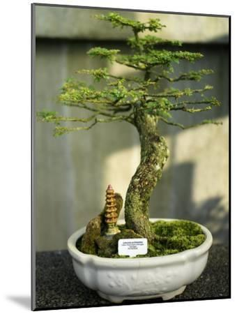 Bonsai Tree Inside of the Botanical Garden in Singapore-xPacifica-Mounted Photographic Print